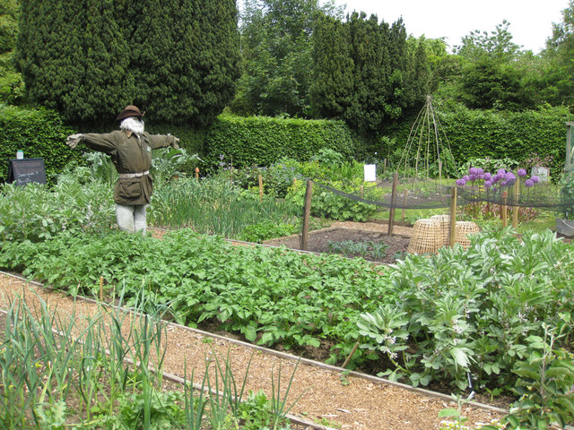 Tips to create the perfect vegetable garden for Creating a vegetable garden