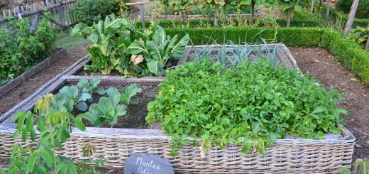 Vegetable gardening archives gardeninginfo online a few useful sustainable gardening ideas workwithnaturefo