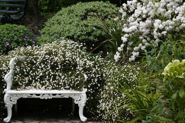 ten shrubs and plants for your garden