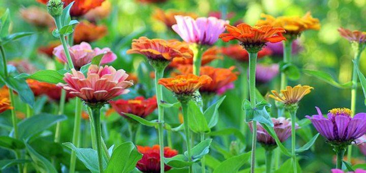Garden Design Ideas Archives Gardeninginfo Online