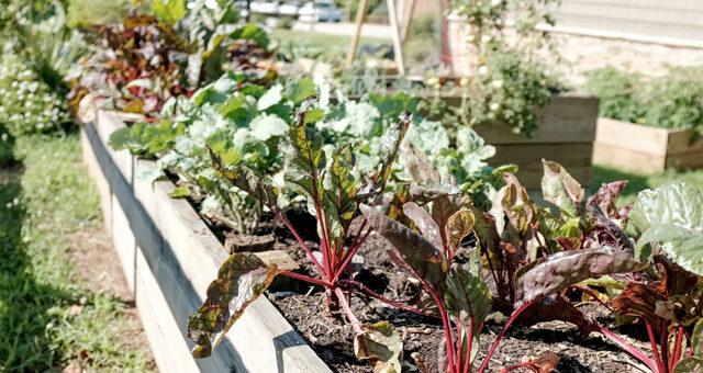 Gardeninginfo Online Create A Beautiful Garden And Landscape